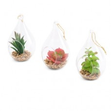 Bungalow Rose 3 Piece Desktop Succulent Plant in Glass Teardrop Terrarium Set