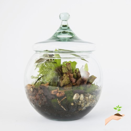Envelor Home And Garden Hanging Terrarium Diy Kit Thick Glass