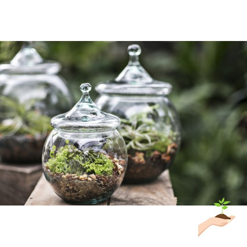 Envelor Home And Garden Superior Quality Glass Terrariums Indoor