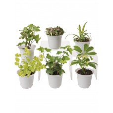 Low Light Terrarium Plant Collection, Set of 6