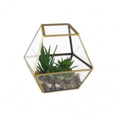 Wrought Studio Desktop Succulent Plant in Terrarium